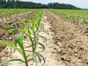 Agriculture CIHEAM
